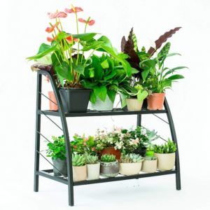 C-Hopetree Plant Stand