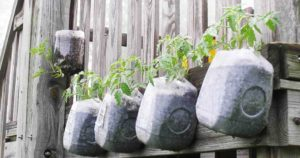 Make the gardens with some unexpected items